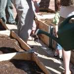 detail of planter boxes and volunteers