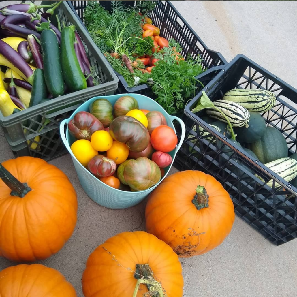 view of fresh vegetables